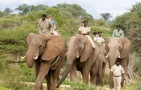 back-safari-elephant