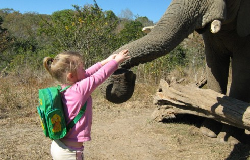 Elephant-Encounters