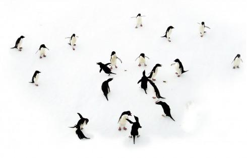 antarctica main