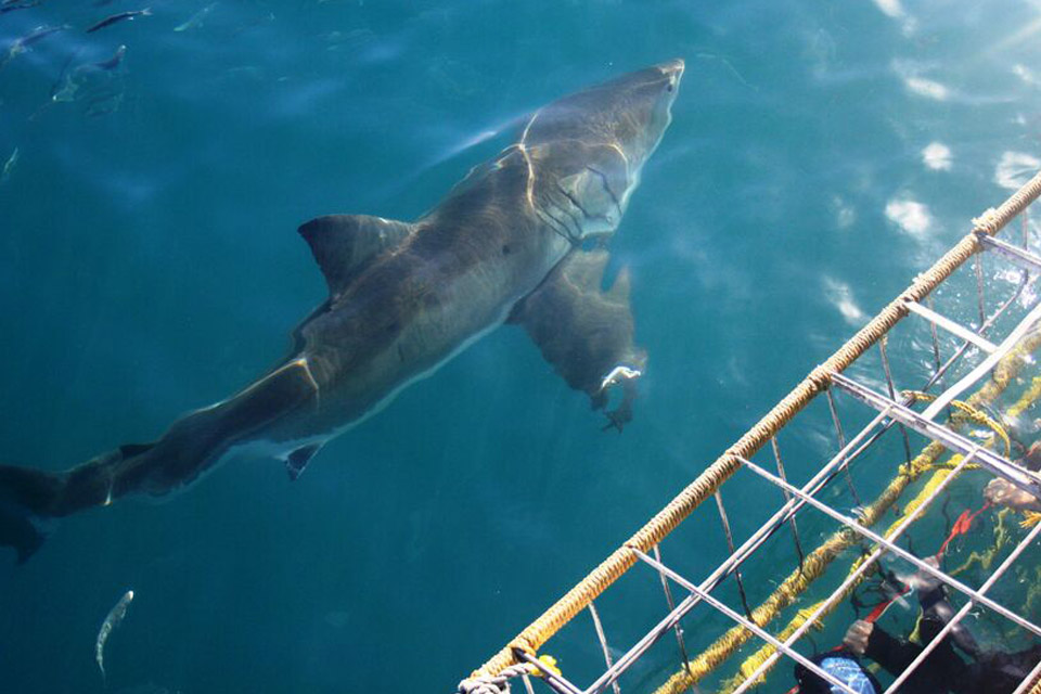 Shark-Cage-2